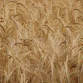 http://www.bakkerswereld.nl/nieuws/garage-gerst-wordt-brood-voor-goed-doel-9364.html