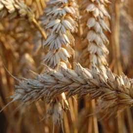 EBIC houdt seminar oogstovergang
