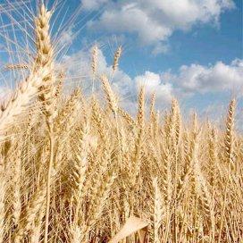 'Indonesië wordt grote importeur van tarwe