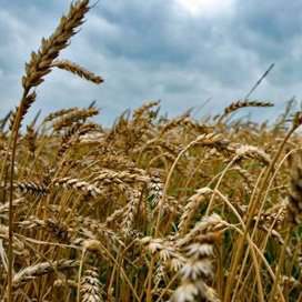 Graanvoorraad groeit in EU