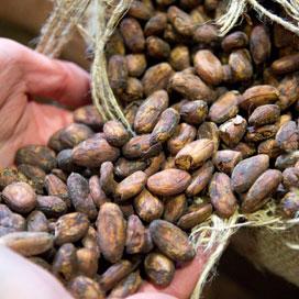 Cacao en cacaoboter steeds duurder