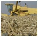 USDA verwacht opnieuw grotere graanoogst