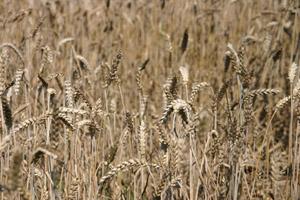 Duitse onenigheid over noodzaak stijgende broodprijzen