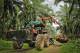 Oliepalmplantage oogst sabah wwfmaleisie mazidiabdghani 80x53