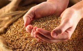 Grondstoffenleveranciers starten voorverkoop van Oogstbrood