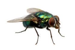 Tips tegen vliegen in de bakkerij: Hoe kan je ze weren en bestrijden?