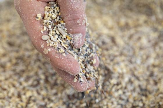 Door zaden puur te behandelen, ontstaat smaakvoller, malser én krokanter brood. Foto's: Anne van der Woude